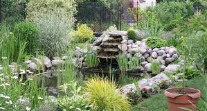 Get to Know the Essential Information for Constructing A Backyard Fish Pond